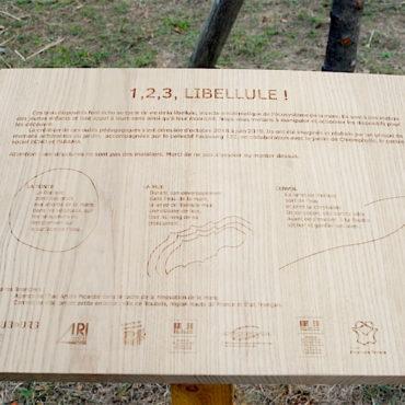 faubourg132-art-design-jardin-chlorophylle-roubaix-outils-pedagogiques-environnement-libellule-16